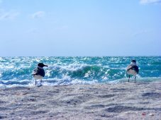 David Schuldenfrei Real Estate - Sanibel-Captiva Island Beach