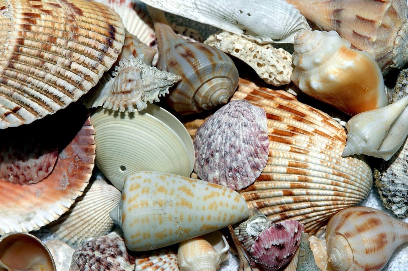 Schuldenfrei Reltor Sanibel-Island-coast-water-nature-sand-ocean