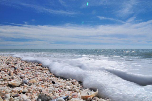 Bowman's Beach covered in shells in Sanibel Island