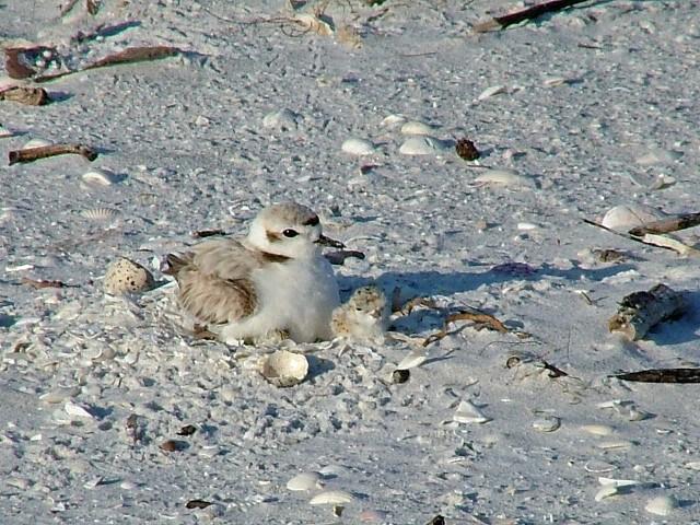 SCCF Provides World Shorebird Day Talks