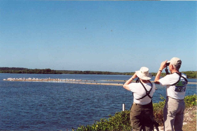 bird watching Sanibel Island