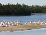 birds on sandbar