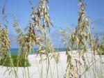 grass on beach