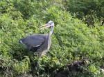 bird in bush