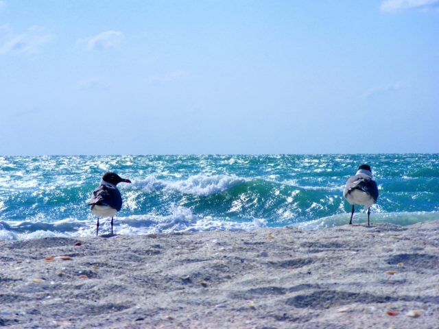 David Schuldenfrei Real Estate - Sanibel-Captiva Island Beach