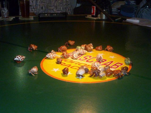 Hermit Crab Races on Captiva Island, FL