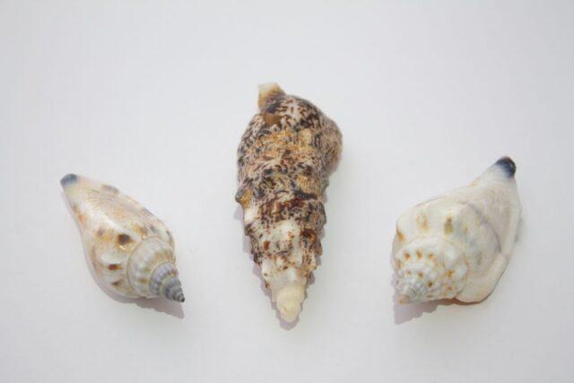 seashells laid out