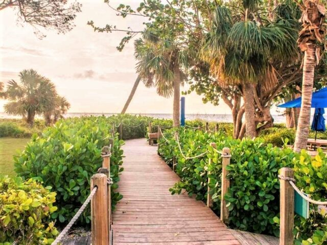 walk way to beach surrounded by green bushes and palms